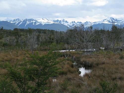 Patagonia marsh