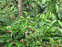 coorg trip (r_anirban) Tags: coffee honey coorg madikeri