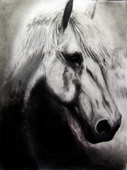 Drawing a Realistic Horse: Final Step. (Jeen Na) Tags: lighting sea portrait horse art face animal price pencil photoshop hair real marketing sketch interesting artist shadows hand market sale drawing unique quality details steps cost save best professional final adobe buy features alive saving sell creature commission selling cheap bargain obsessive genuine posiedon realistic reputable shading compulsive reliable vignetta cs4 perfectionist extremedetail drawingdrwaingarealistichorse howtodrawahorse