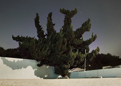 tree (ryan schude) Tags: tree night stars photography losangeles cypress frogtown elysianvalley wwwryanschudecom