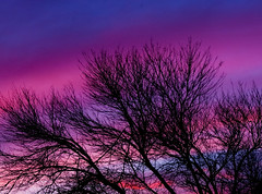 Winter's Trees (TPorter2006) Tags: pink blue trees cloud interestingness interesting skies texas purple grandmother january medal hero 300views halloffame simple hof pinnacle 2010 bigmomma tporter2006 herowinner thepinnaclehof 1galleries tphofweek32 motmsept10