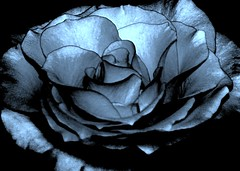 Winter Joy (delsignorem) Tags: blue winter agate rose happy you jan what sterling makes icy serpentine 2010 delsignorem