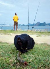 Sashimi para gatos [Sashimi for cats] (Jim Skea) Tags: brazil fish brasil riodejaneiro cat fisherman sashimi wideangle peixe gato fisher aterrodoflamengo flamengo morayeel pescador baadeguanabara flamengopark guanabarabay grandeangular moreia parquedoflamengo mocreia fujifilmfinepixs5pro enguila