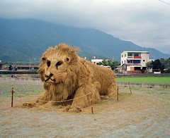 The Giant Wicker Lion (deepstoat) Tags: colour 120 film mediumformat weird big lion taiwan straw huge roll sacrifice kingofthejungle mamiya7ii kodakportra deepstoat