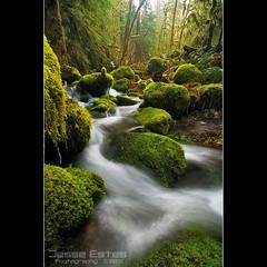 Columbia River Gorge (Jesse Estes) Tags: creek moss columbiarivergorge oneontacreek jesseestesphotography