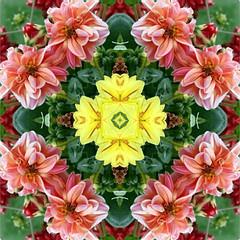 Dahlia Garden Kaleidoscope (Ate My Crayons) Tags: pink flowers abstract art geometric digital mirror design artwork abstractart digitalart gimp kaleidoscope mandala symmetry computerart fractal amc thegimp tutorial kaleidoscopes artdigital kaleidoscopesonly gimptutorial artgimp