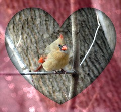 Multi Tasking! (makeupanid) Tags: toronto female hearts highpark cardinal bokeh framed chinesenewyear valentines olympics picnik 2010 cardinaliscardinalis gongxifacai northerncardinal gbbc