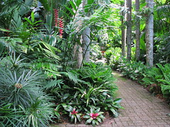 Tropical landscaping, Cairns Botanic Gardens (tanetahi) Tags: australia cairns northqueensland cairnsbotanicgardens tropicallandscaping