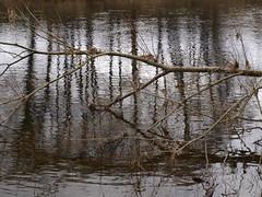 River Eden (seanwilliams85) Tags: cumbria hadrianswall awil seanwilliams steelrigg rivereden wetheral twicebrewed ancientlondon heritagekey illuminatinghadrianswall