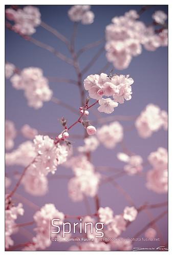 Le printemps est l� , bien l�