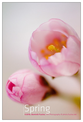 Spring attitude <img border='0' src='http://www.fusina.net/smileys/smile.png' align='absmiddle'>