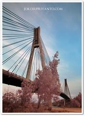 Jembatan Barelang Di Malam Hari