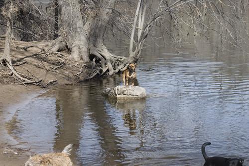 stranded puppy