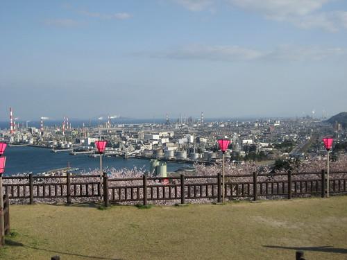 大竹 亀居公園 桜 画像 28