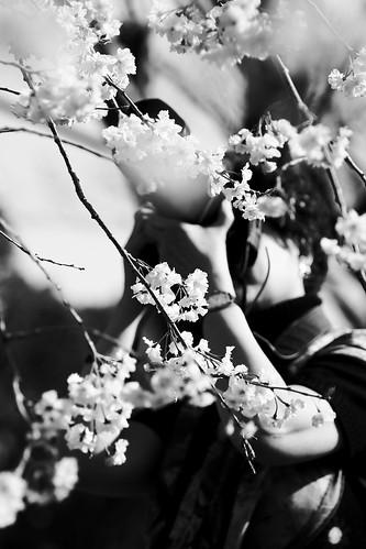 桜とカメラウーマン モノクロ