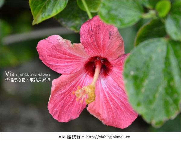 【沖繩旅遊】跟著我玩琉球~愛上琉球的一百種玩法2