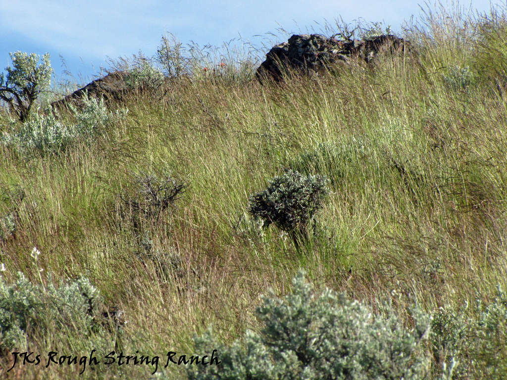 Spring Grass in the High Desert