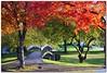 Autumn Splendor at Croghan Park (OSU.MD) Tags: park bridge autumn trees ohio red green fall canon 50mm dof fairlawn croghan cotcpersonalfavorite 40d