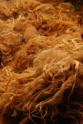 icelandic fleece 2009
