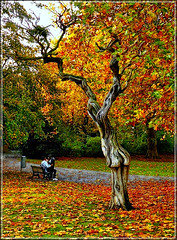 All in the Golden Afternoon - l'Amour toujours l'amour... (jackfre2) Tags: park city autumn boy red tree green fall girl leaves yellow belgium path branches centre lovers lap oldtree dirtroad antwerp waste twisted citypark stadspark bech sittinf