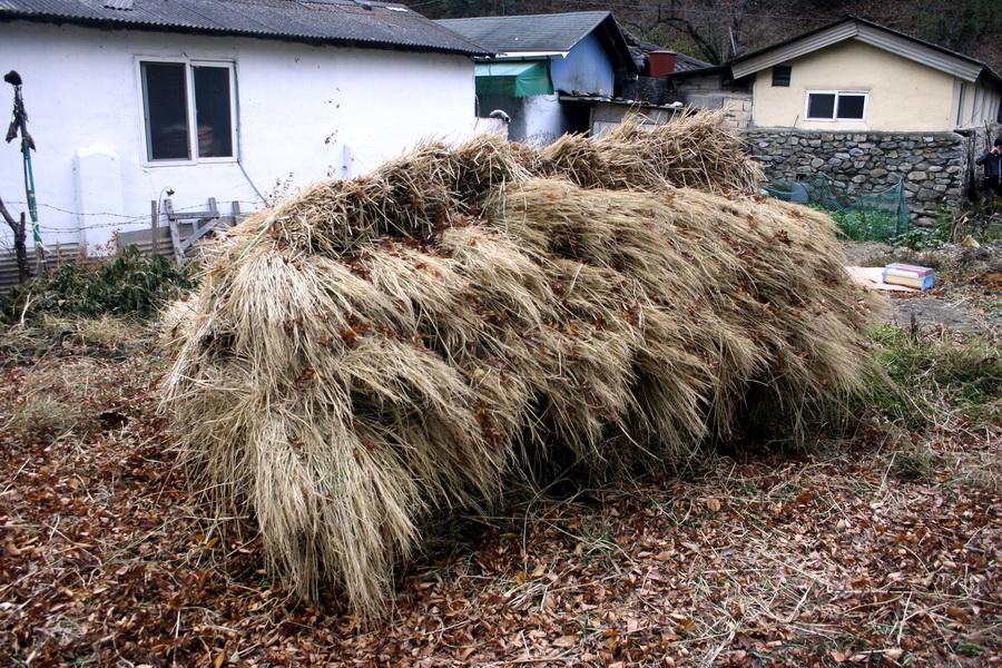 Rice hay