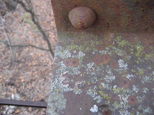 Bridge Lichen