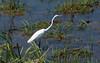 Zuid Afrika - 09.14 (ikmattie) Tags: holiday bird animal southafrica greategret krugerpark zuidafrika wittereiger 12500secatf80 vakantie2009za