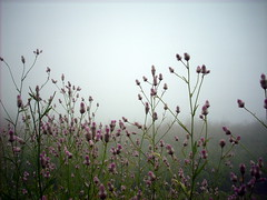 Nature's Pink! [Explored] (D a r s h i) Tags: pink flowers mist green nature grass fog torna litle darshi darshita