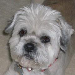 Teddy, age 14