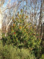 Moncayo en Otoño (Javier Garcia Alarcon) Tags: árboles paisaje árbol otoño acebo moncayo