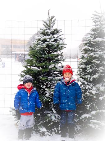 Christmas_Tree-6