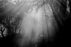 MC Solar (Duncan George) Tags: trees newzealand blackandwhite sunlight mist monochrome fog landscapes nikon steam beam fx lightbeams waimangu lightrays d700 primevalforestgroups pfbeams pffog