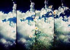 A Sense of Summer... (Trapac) Tags: blue sky clouds daisies daisy white yellow green grass flowers four 4 vertical panels repetition summer 2009 cotham bristol england uk film fuji provia fujiprovia100f crossprocessed xpro supersampler plasticcamera plasticfantastic lomo omo lomography vivitar vivi vivitarws vivitarultrawideslim vivitarultrawideandslim vivitarroll42 doubleexposure doubles explored flickrcollectionongetty tracypaackerphotography wwwtracypackercom