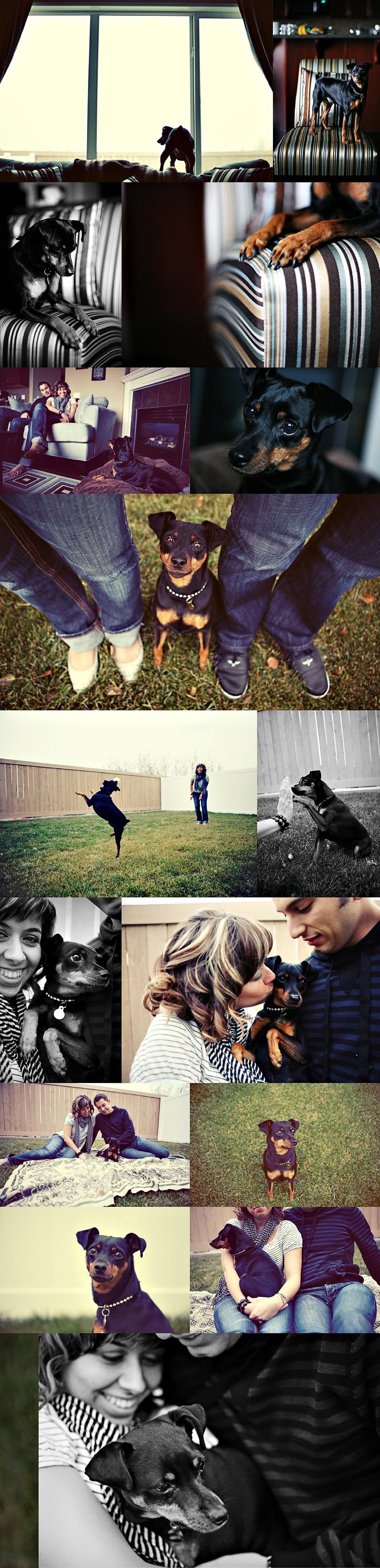 edmonton dog photographer