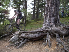 MTB Aviemore, Wolf Trax and Cairngorms