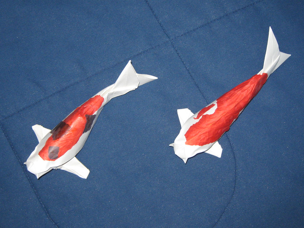 The world 39 s best photos of carp and origami flickr hive mind for How to make origami koi fish