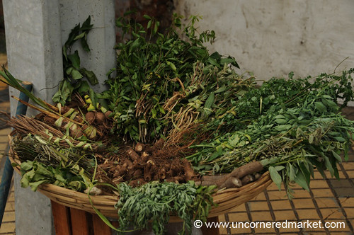 Herbs for Terere in Asuncion, Paraguay
