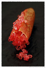 Finger Lime© by Haalo