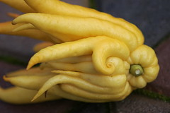 Chin Mudrā (smashz) Tags: fruit hand buddha citrus mudrā