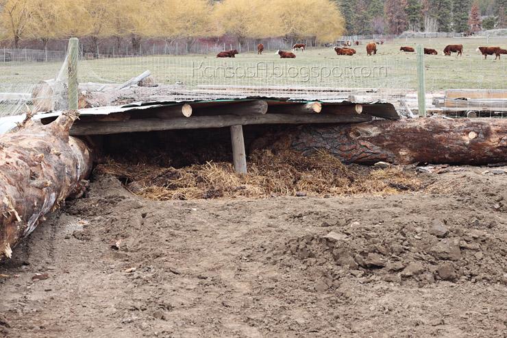 Pig shelter (by KansasA)