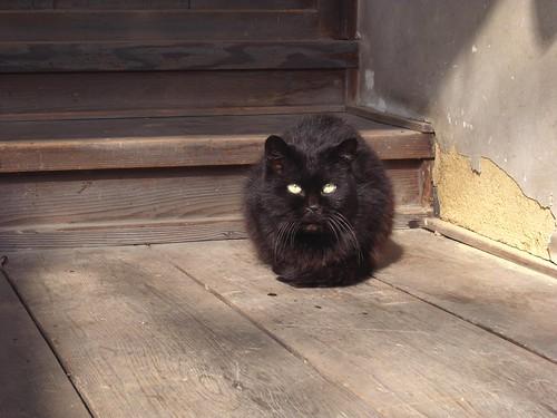Today's Cat@2010-03-18
