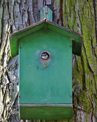 Kleiber im Vogelhaus