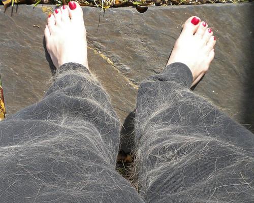hairy pants