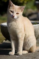 gato (squaredpxx) Tags: gato felino
