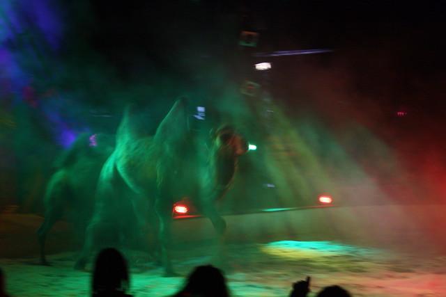 Der Auftritt der Kamele war sehr spektakulär ...