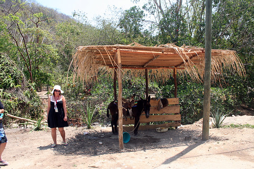 Puerto Vallarta - City and Tropical Jungle Escape Tour - Sad Burro Waits for Your Sad Photo Op
