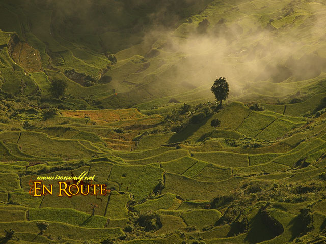 A lone tree and rice terraces pattern