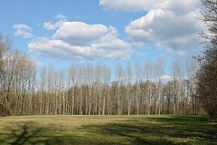 Sunny Day (federicasandrin) Tags: trees sky italy cloud white tree verde green nature alberi clouds canon italia nuvole peace nuvola walk bluesky natura cielo pace albero bianco varese palude bigclouds passeggiata bigcloud paludebrabbia canoneos1100d grandenuvola grandinuvole