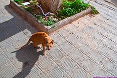 Tunisia (Elfson1) Tags: cat tunisia angry sousse