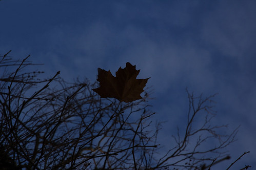 18-11-2009_solitary_maple_leaf_rs